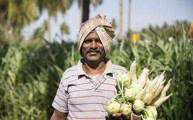 为何印度粮食产量仅中国一半, 能养活同等人口, 还大量出口?