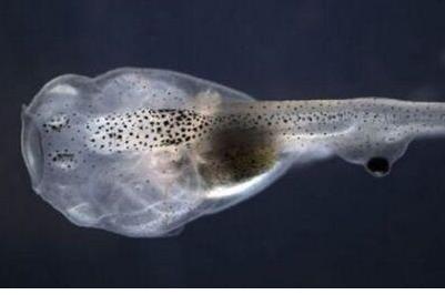 蝌蚪的尾巴歇后语图片
