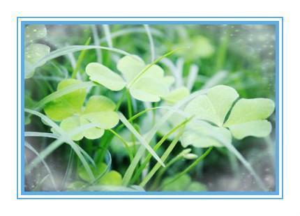 壁纸 花 盆景 盆栽 植物 桌面 430_310