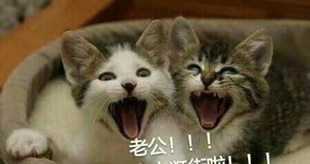 一组猫咪喊老公表情包!简直萌翻了图片