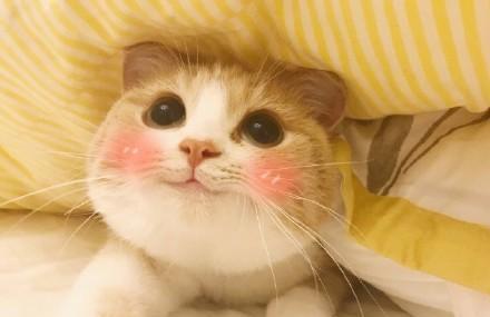 知道表情上小萌猫手机叫Bobi,世上典經表情包图片