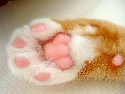 看看这些可爱的猫咪的爪子,我们怎么可以忍心下得了口?