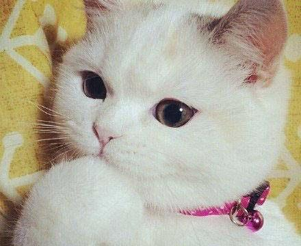 一只非常可爱的猫咪,撒娇卖萌,网友:小肉拳捶你胸口!