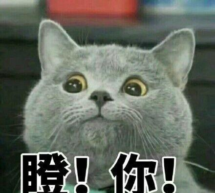 斗图人意,你们出来了,我完蛋了熊猫表情思表情包有点图片