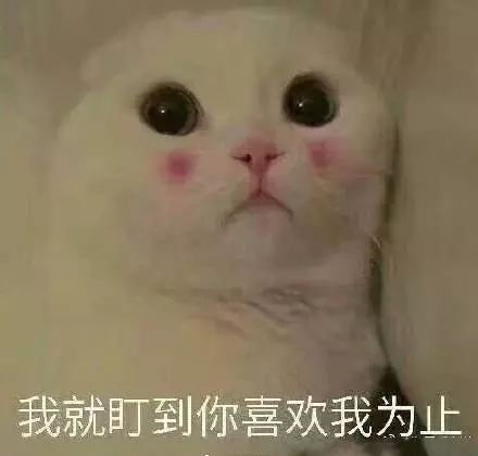 可爱表情表情带字猫咪当场生成器抓获表情包图片