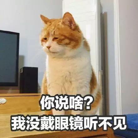 橘猫 柴犬 二哈 最全表情包,助你斗图战无不胜 表情包 柴犬 阿拉斯加 新浪网