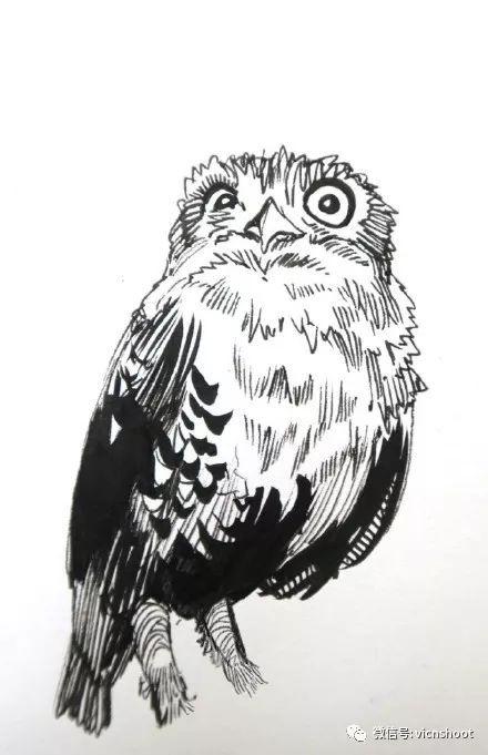 针管笔绘画作品——动物