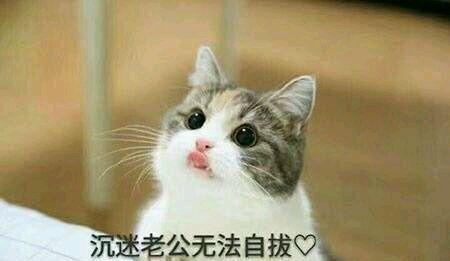 猫咪撒娇表情包,没有男朋友的就不要点进来了