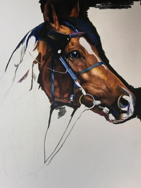 写实彩铅手绘——马 | 作者:小柴ys