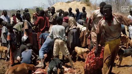 非洲人吃老鼠青蛙猴子, 会不会吃大象? 大象的肉好不好吃呢?图片