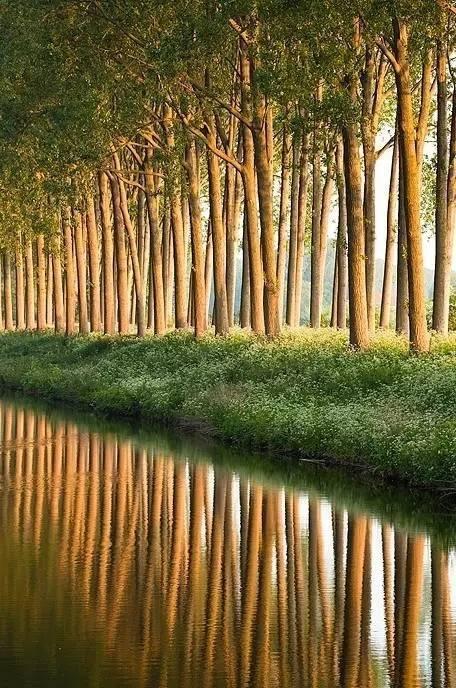 中国花鸟风景图:张张都是大自然的杰作,震撼人的心灵!