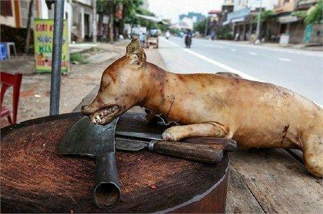 哪种人不能吃狗肉_越南人吃狗肉 据说这个习俗有可能从中国广东传入!