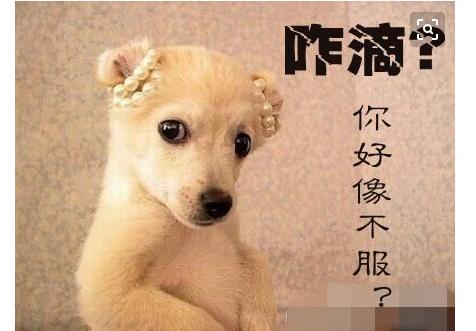 [中国扇贝产地]扇贝又跑了!中国股市奇闻频现,刷新三观!散户:就问你服不服?