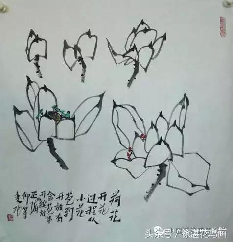 根据荷花花瓣的各种角度透视变化进行造型推理,从而了解花的结构变化