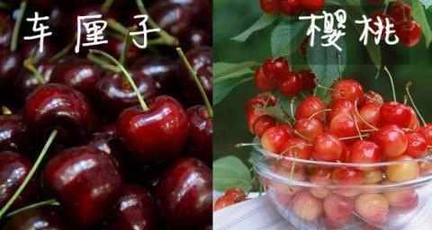 车厘子和樱桃有什么区别?是同一种水果吗?