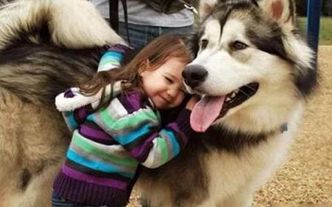 遇见你是我最大的幸运,狗狗做过哪些让你感动的事?