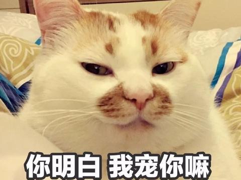 这只网红猫的表情包,够你们用到年底了!图片
