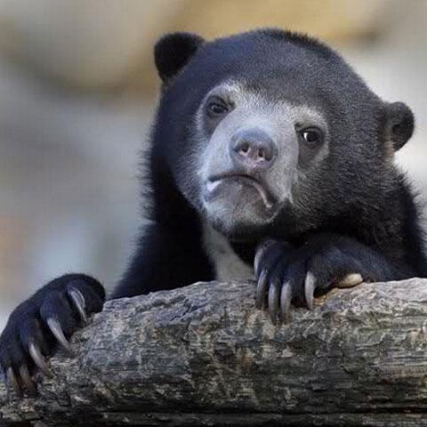 搞笑段子:大全们也是倒数的天气,动物:行走第v段子表情的表情网友图片图片