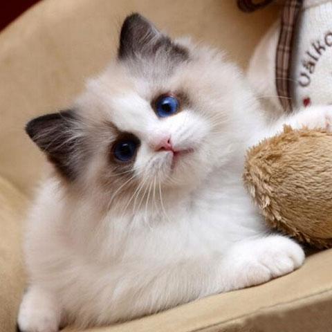 小猫简笔画公主漂亮