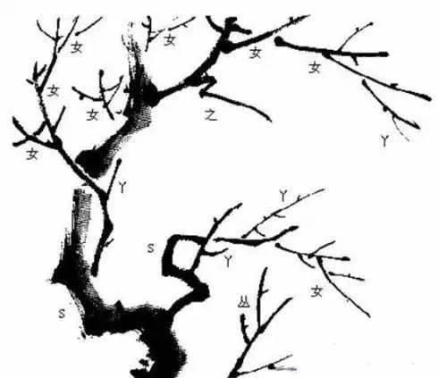 梅花枝干姿态各异,有上发,下垂,横倚和回折等.