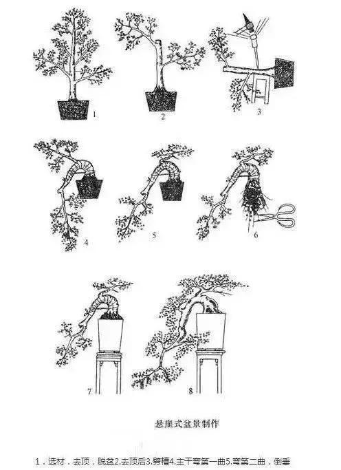手绘盆景设计图