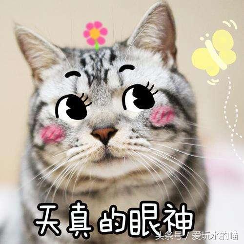 搞笑的动态背后故事猫咪的表情,拿去哄女朋经典亲嘴图片晚安表情包图片