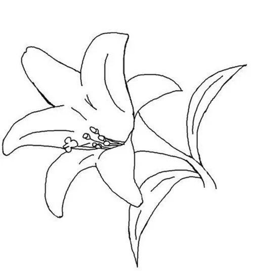 10种花朵简笔画, 美丽又生动, 适合3-8岁孩子, 妈妈再