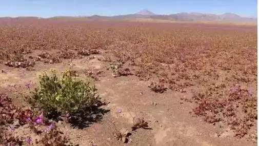 400年不下一滴雨的沙漠, 雨后竟出现奇迹