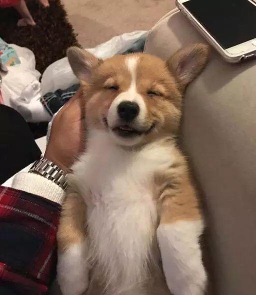 搞笑萌宠:分享几只睡的糊糊的小奶狗萌翻了