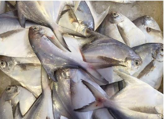 """南方沿海各种常见海鲜, 只能说海鱼的种类真的太""""丰富图片"""