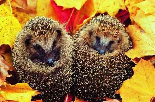 冬天到了,你知道哪些动物是要冬眠的吗