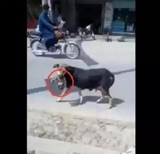 流浪小狗在垃圾堆翻出一块肉咬着不松口,走近一看竟是遗弃婴儿!图片