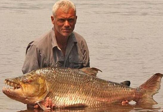 认识一下巨型水虎鱼,高能预警!
