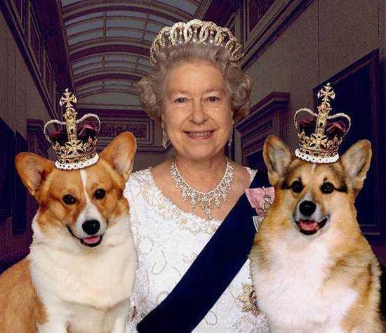 女王的柯基犬在线播放