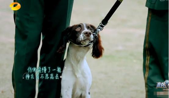 最后与犬分别杨烁哭成泪人!心酸!