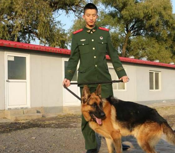 军犬哭囹�a��(�-c_军事游记,军犬亮相,它们能萌化你也能暖哭你