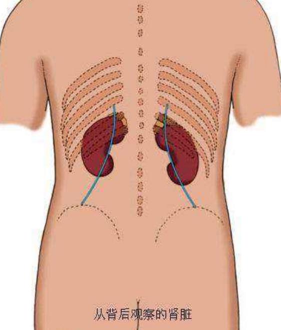 如何判断自己的肾好不好?看肾的封藏固摄功能