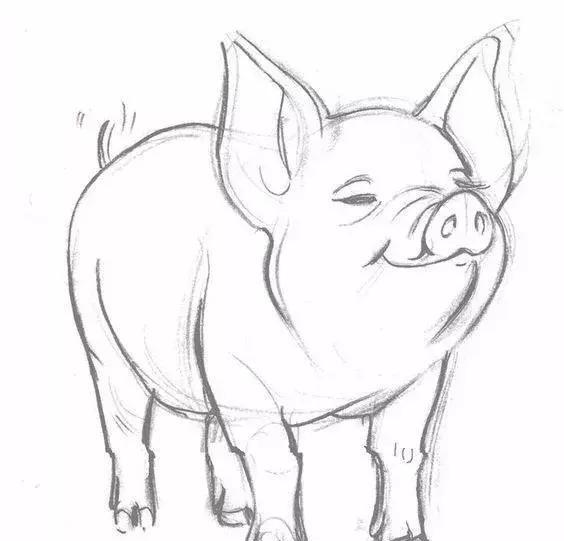 11· 猪的简笔画