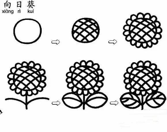 简笔画教程:向日葵的简笔画