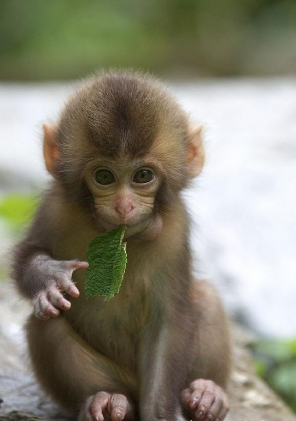 笑枭搞笑段子:你是猴子请来的救兵马?