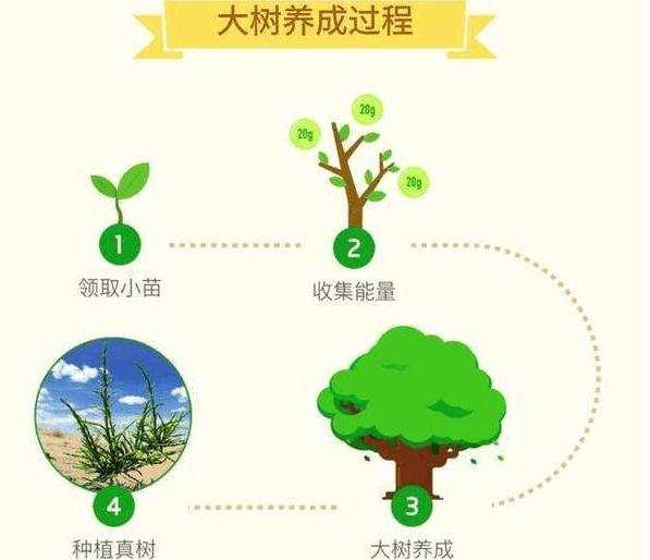 支付宝蚂蚁森林什么时候领树图片