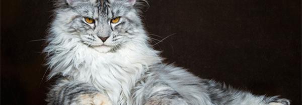 猫咪侧面手绘图片大全