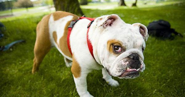 宠物风水:狗狗五行属甚么?弄懂了再去养狗!