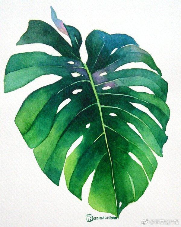 水彩植物练习素材 | ins:somaillust
