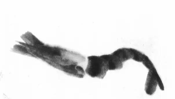 图文教程 详解齐白石画虾步骤2018年01月17日11 55新浪看点作者喜欢绿豆地董小姐缩小字体放大字体