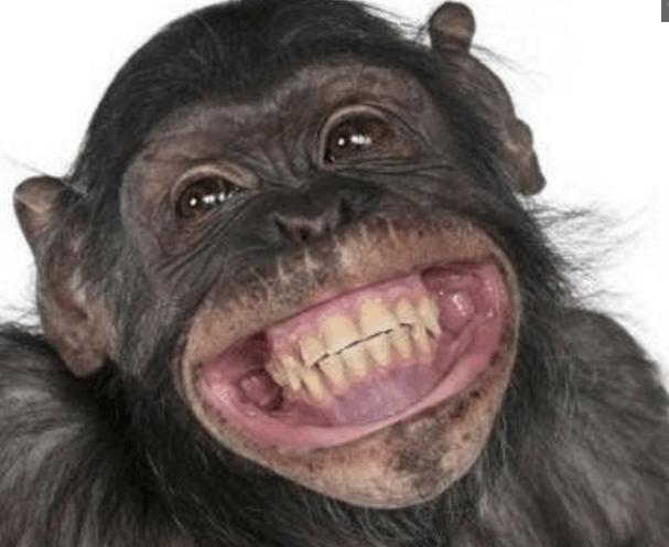 看看这些动物的笑脸, 怪不得那么多人喜欢养宠物! 太可爱