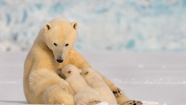 有妈的孩子像块宝,动物妈妈和宝宝的暖心瞬间!