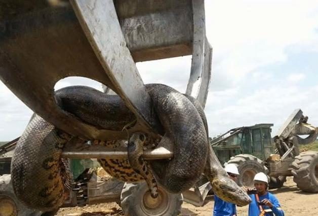 巴西工人在修建水库时发现一条巨蛇,没想到连专家都表示称奇!