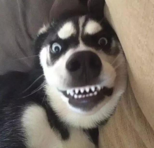 什么动物是,.龇牙咧嘴凶巴巴,阴阴怪气真哆嗦图片