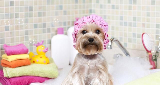 科普|为什么狗狗不能用人用的沐浴露洗澡呢?